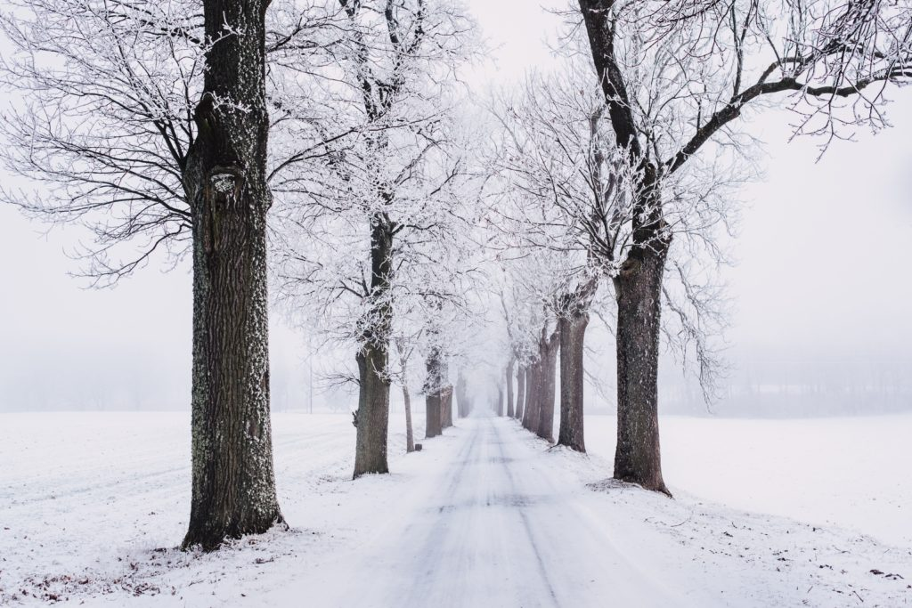 snowy road lined with trees