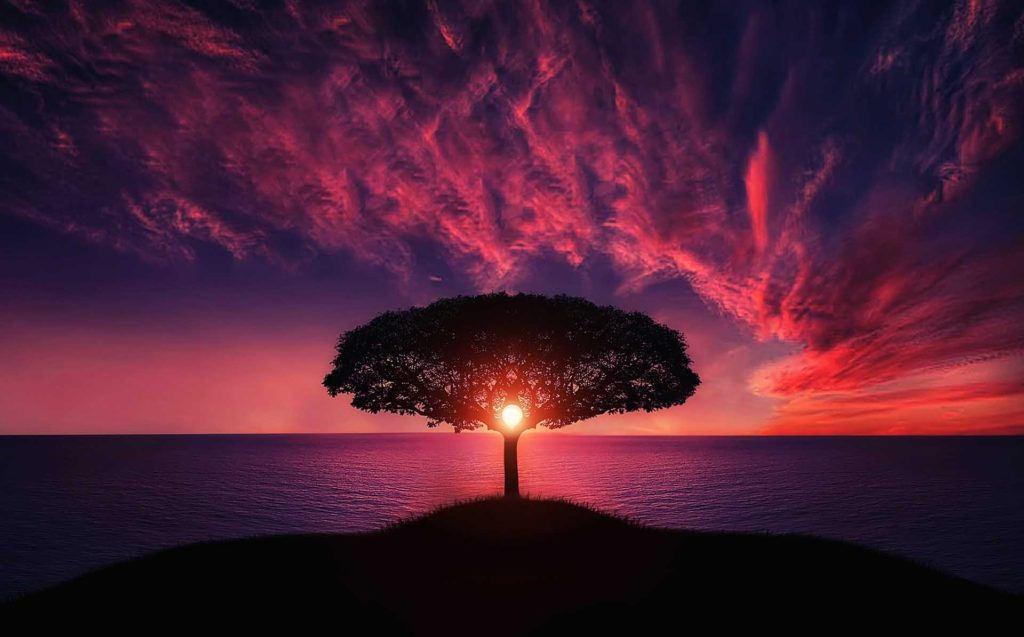 tree and pink sunset