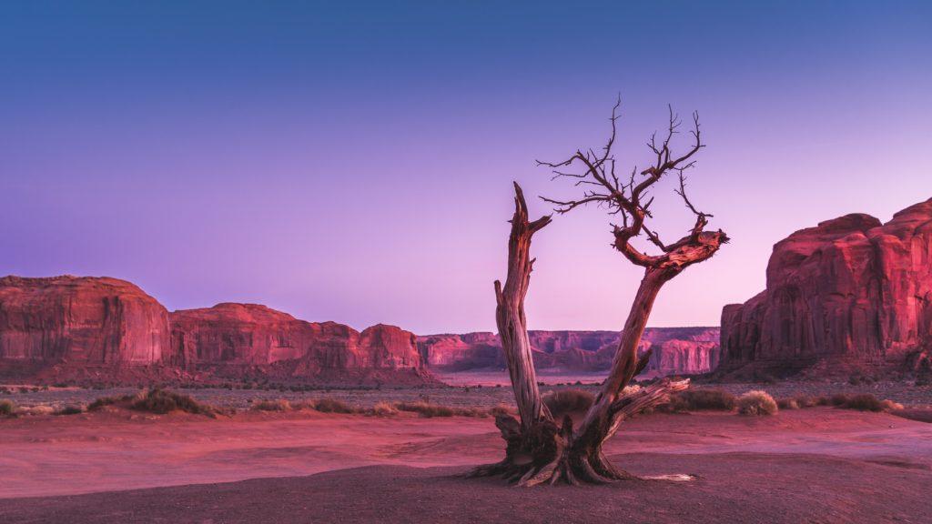 tree in desert at pink sunset