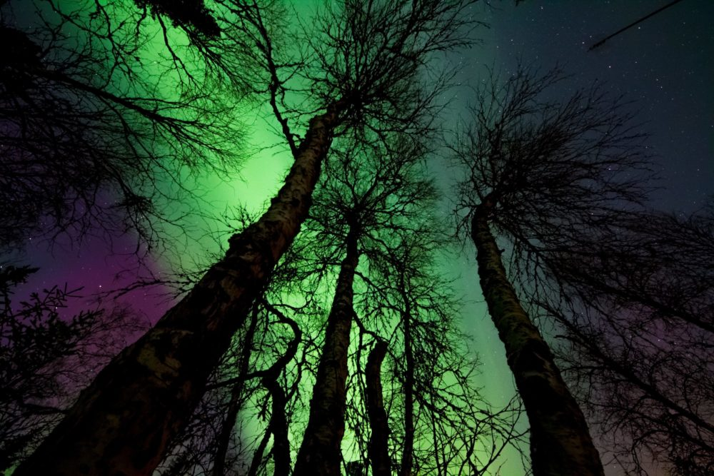 northern lights in forest