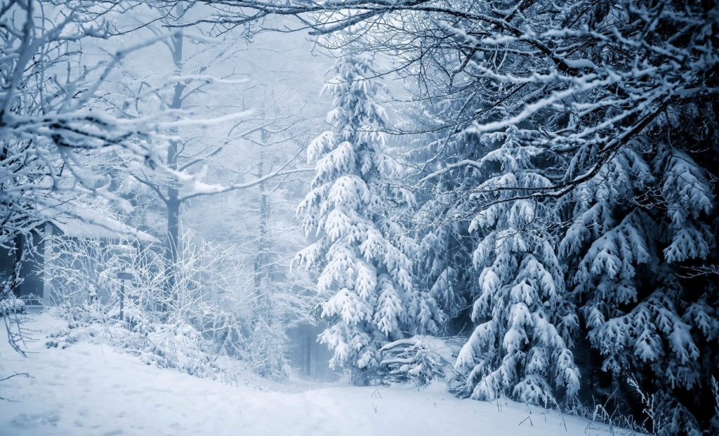 snowy landscape with trees
